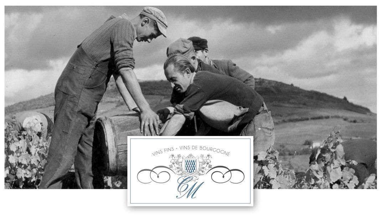 Logo de la Cave de Mazenay - des vignerons travaillent dans les vignes